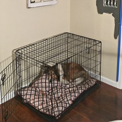 Dog Crate DIY hack Before picture
