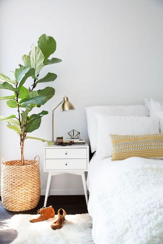 house plant in bedroom
