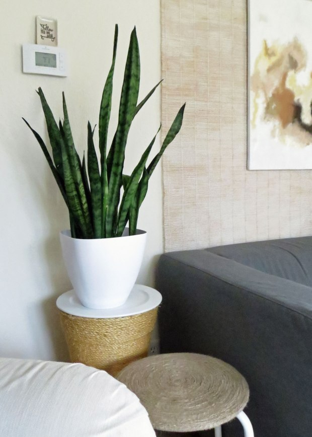 good excuses first-time home buyer The Decor Guru sneak peek teaser living room snake plant neutral Valspar Cozy White paint