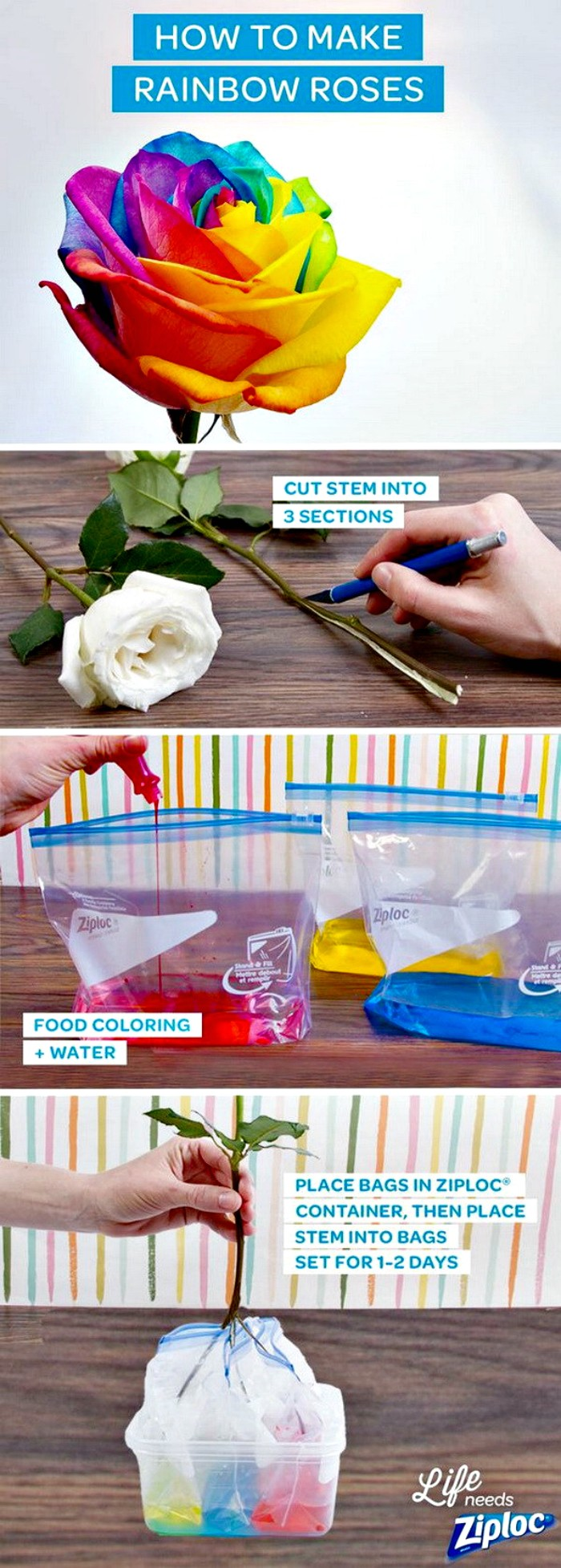 Gorgeous Rainbow Roses Cheap DIY Projects For Your Home Decoration